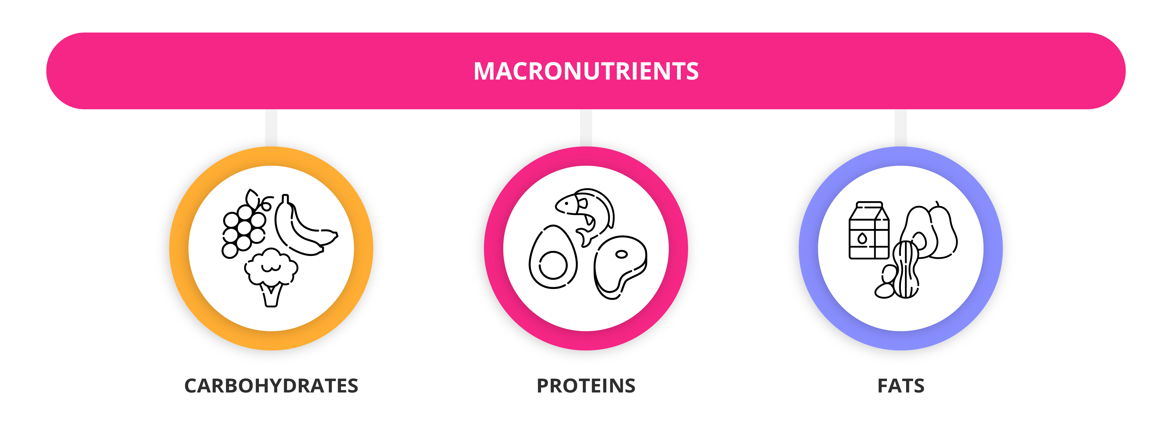 What Are Macronutrients And Micronutrients Getsmarter Blog